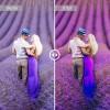 Mobile Lightroom Preset - Lavender
